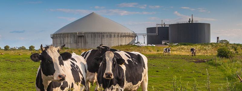 renewable natural gas production sources